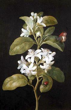 57c46b53e6a68eb44bcc6e79676d6c46-art-flowers-white-flowers